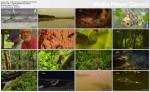 Dzika Amazonka / Wild Amazon (2010) PL.1080i.HDTV.x264 / Lektor PL