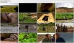 Zaginiony Raj w Afryce / Africa's Lost Eden (2009) PL.TVRip.XviD / Lektor PL